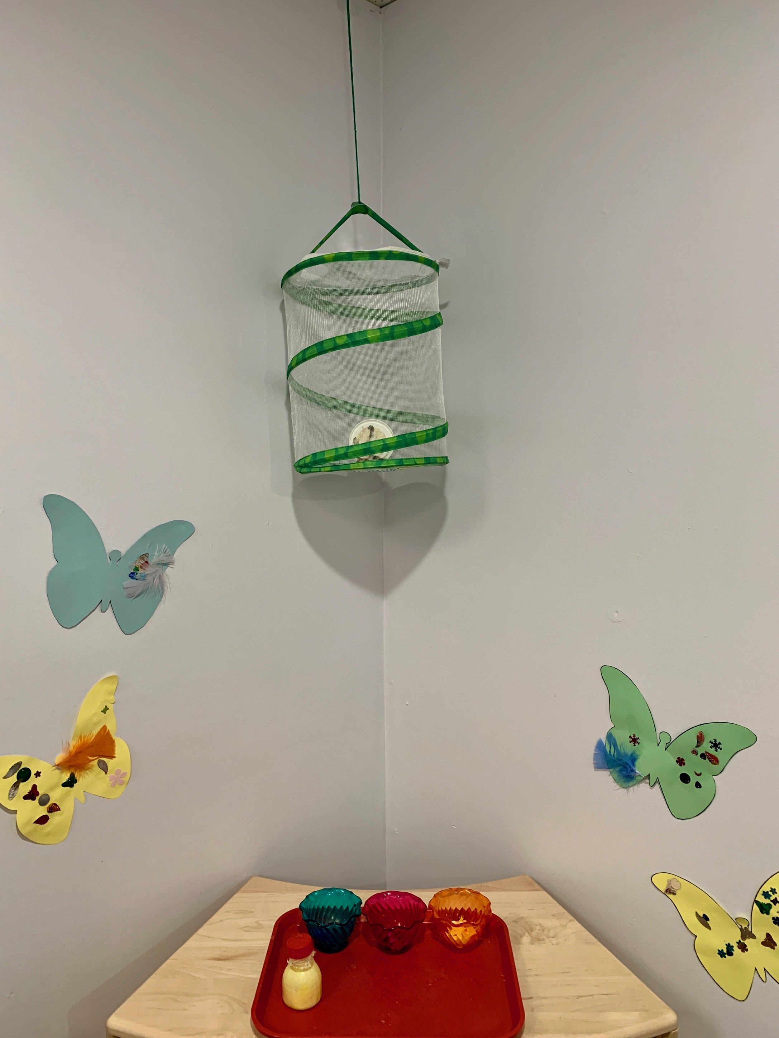 T2 butterfly 3.JPG