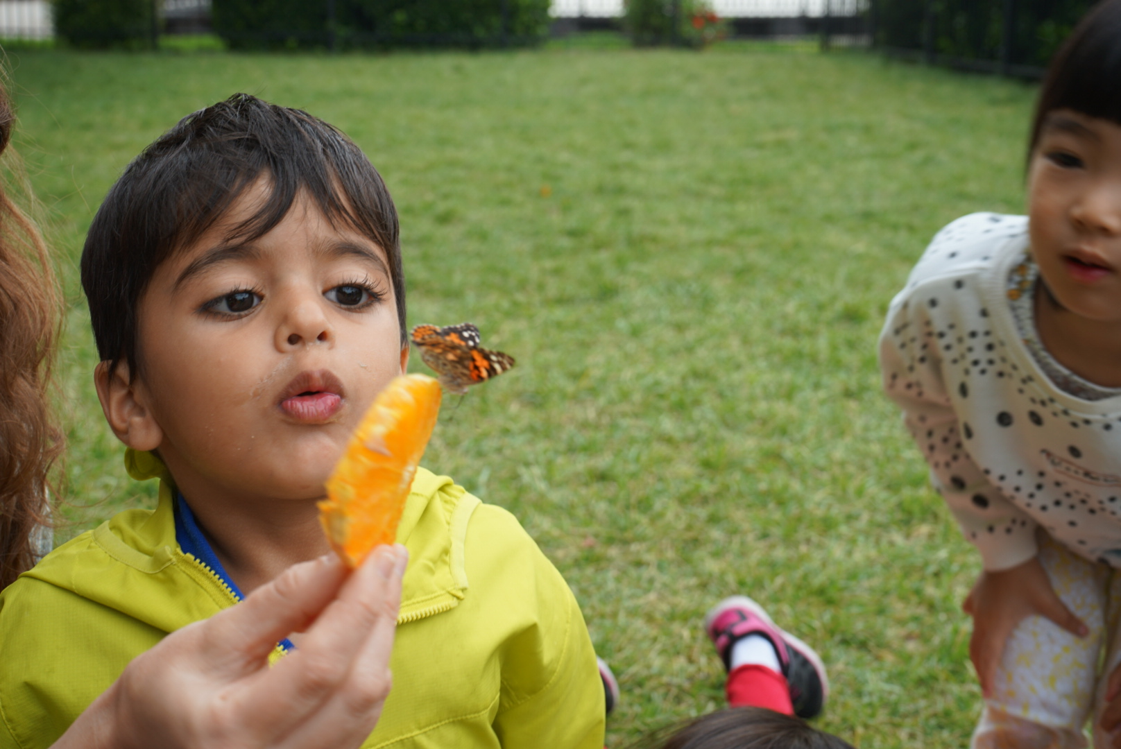 T2 butterflies 4.JPG