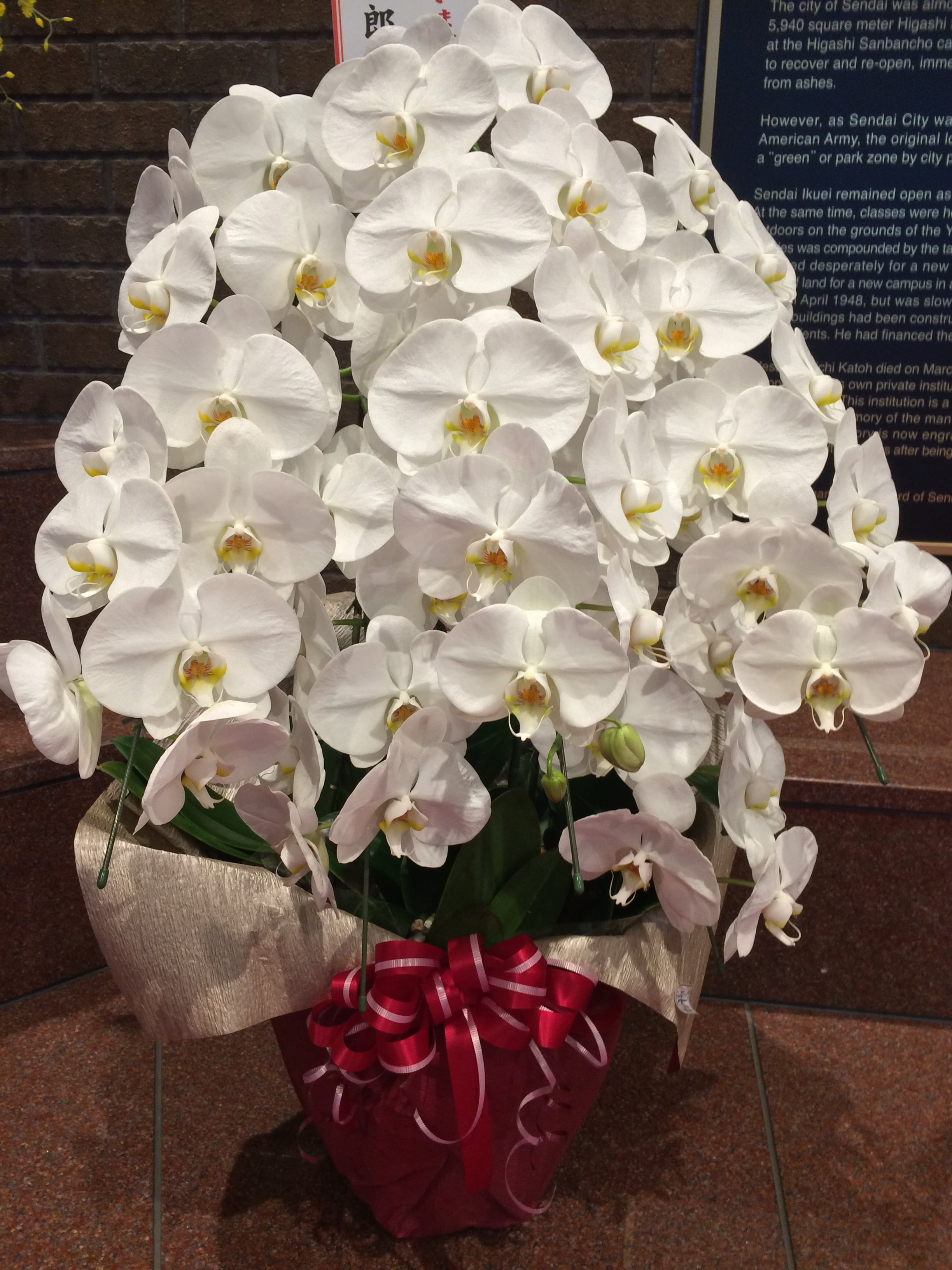 Beautiful orchids displays were throughout the school in celebration of the Sendai High School Boy's trip to the HS Baseball Championships! They lost in the final playoff, but the entire town was proud of their achievements. It was the first time in 100+ years they had made it to nationals!