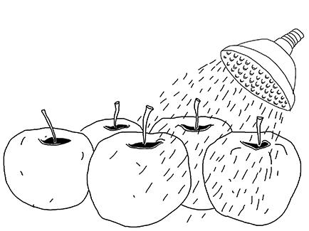 TITLE  Lorem ipsum blabla Before washing them, we selectthe most beautiful apples manually.