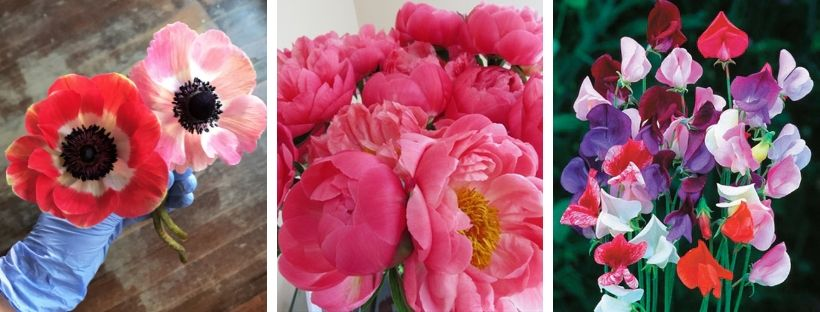 Some seasonally available flowers. From left to right: Anemones, peonies, sweet peas
