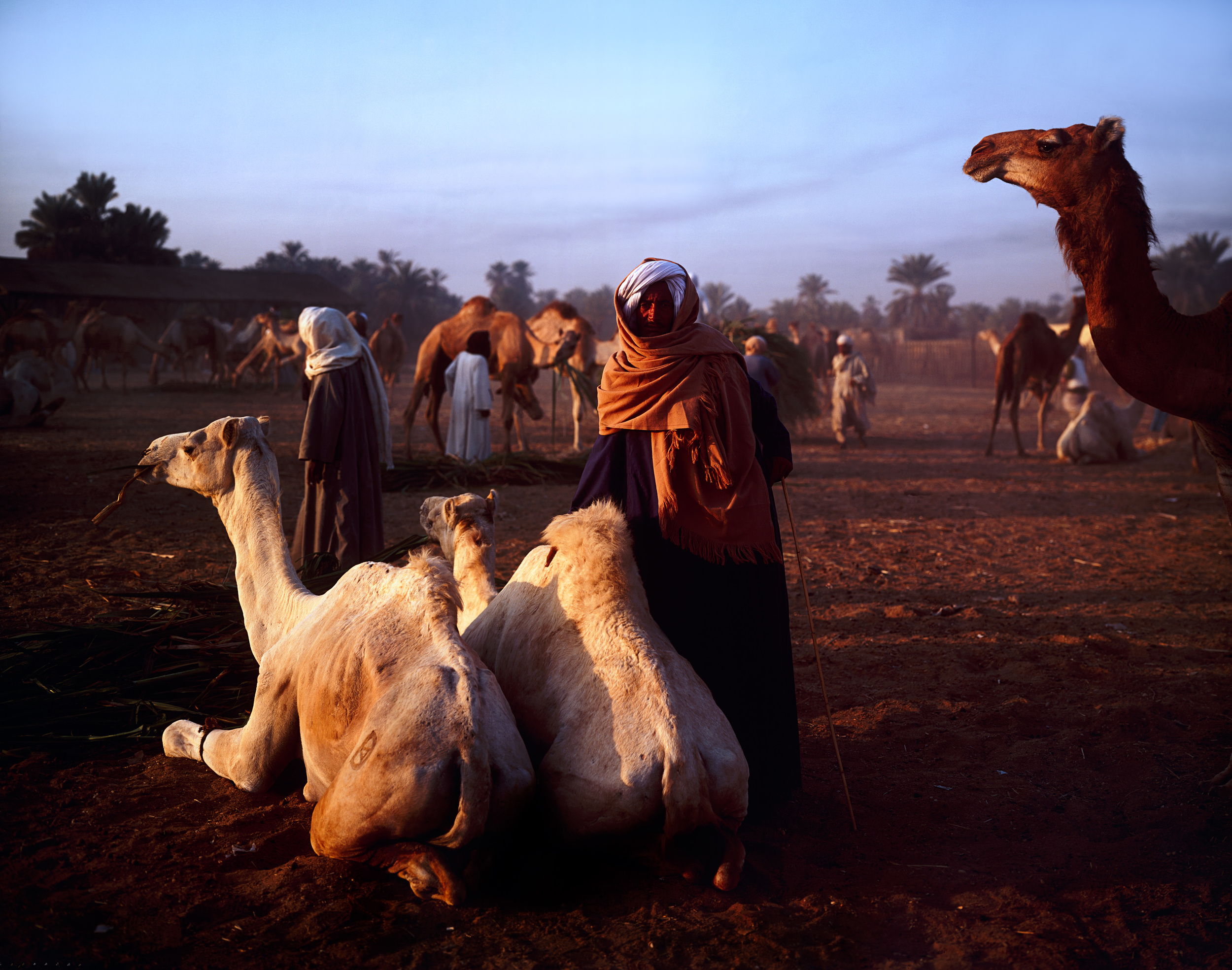 Darawa Camel Market, Egypt.