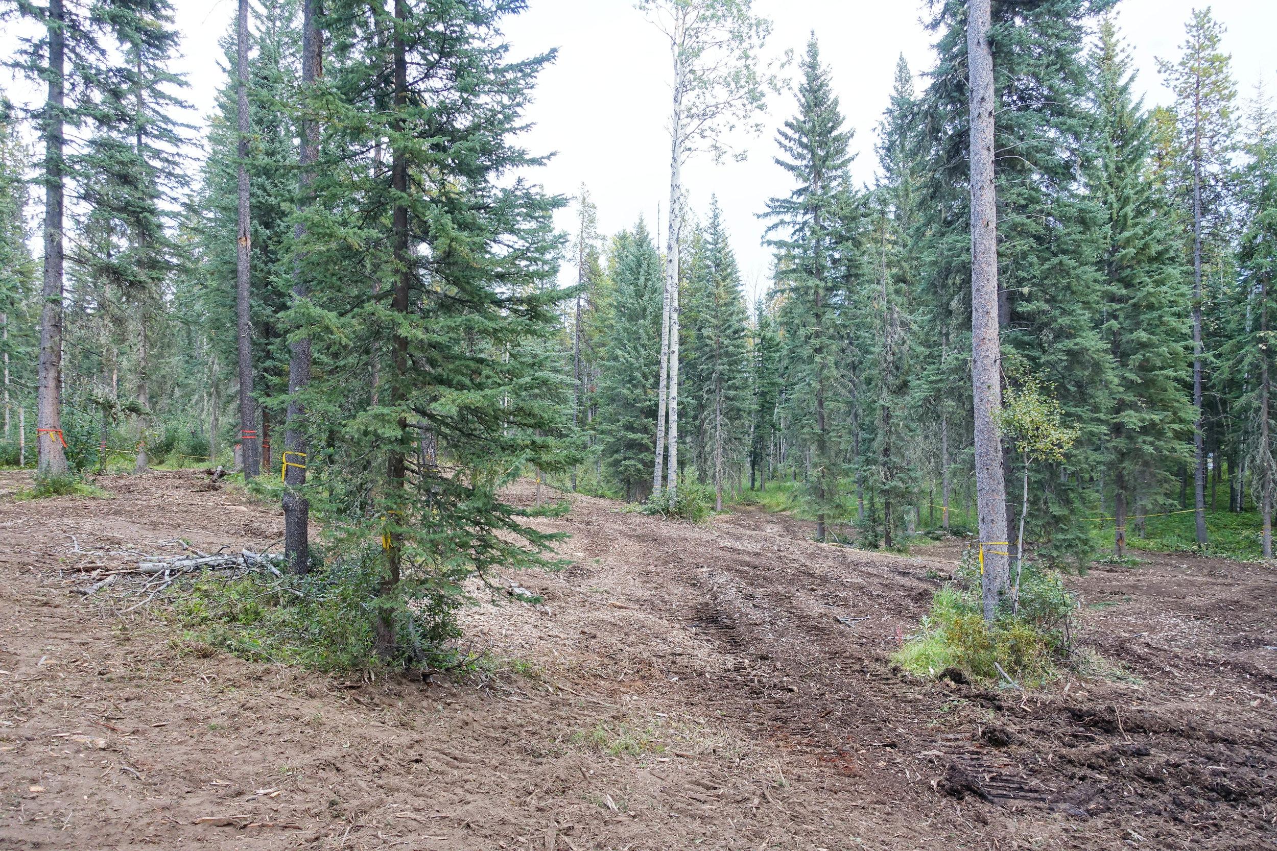 Flow trail coridoor mulch work.