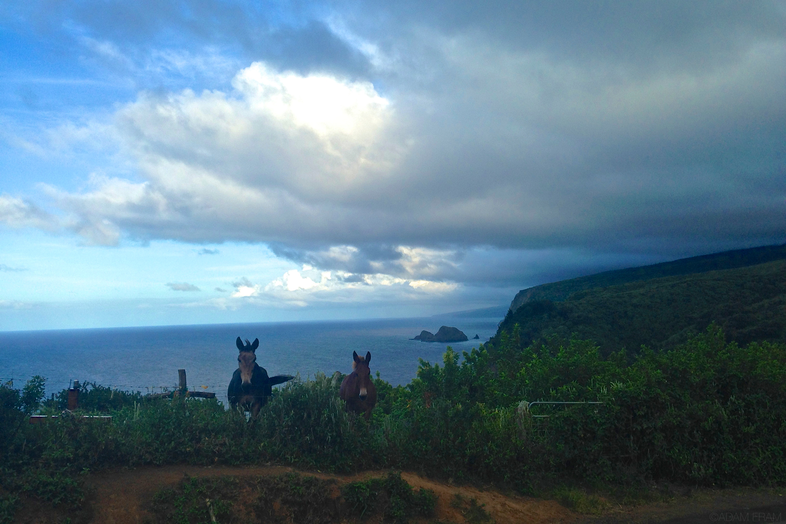 PololuValley_lookout_horses_coast.jpg