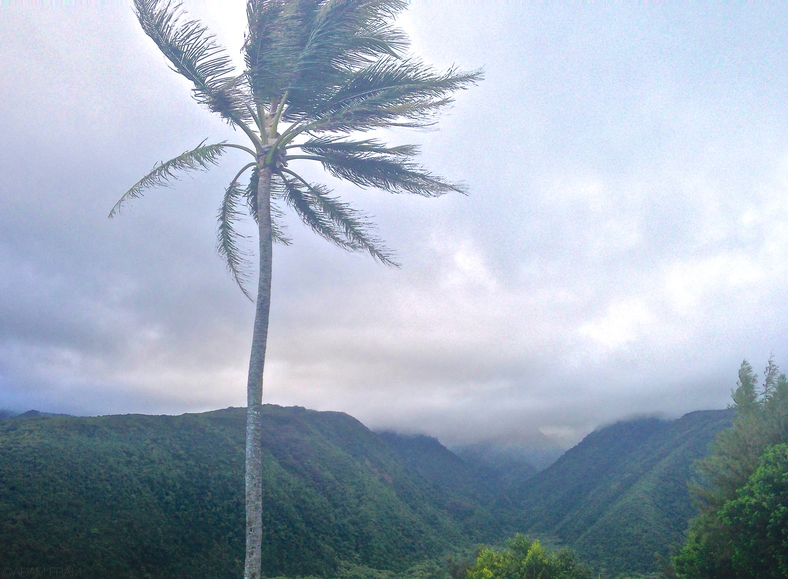 PololuValley_lookout_palmtrees_inland.jpg