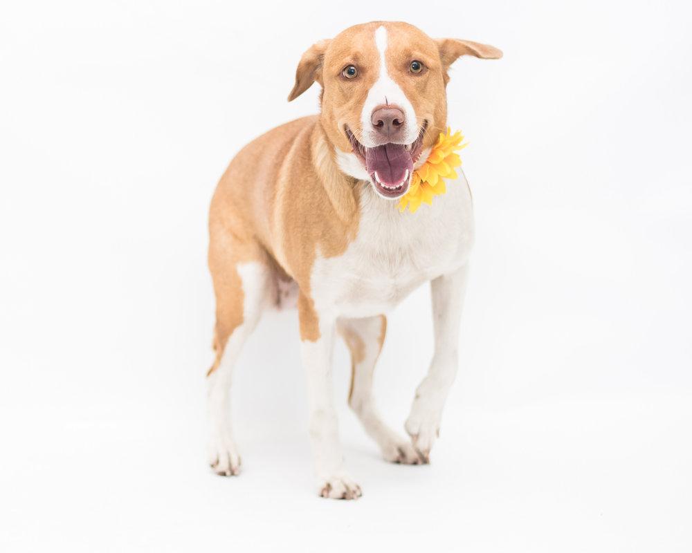 dog — Blog — Sonacity Photography | Wedding Photographer