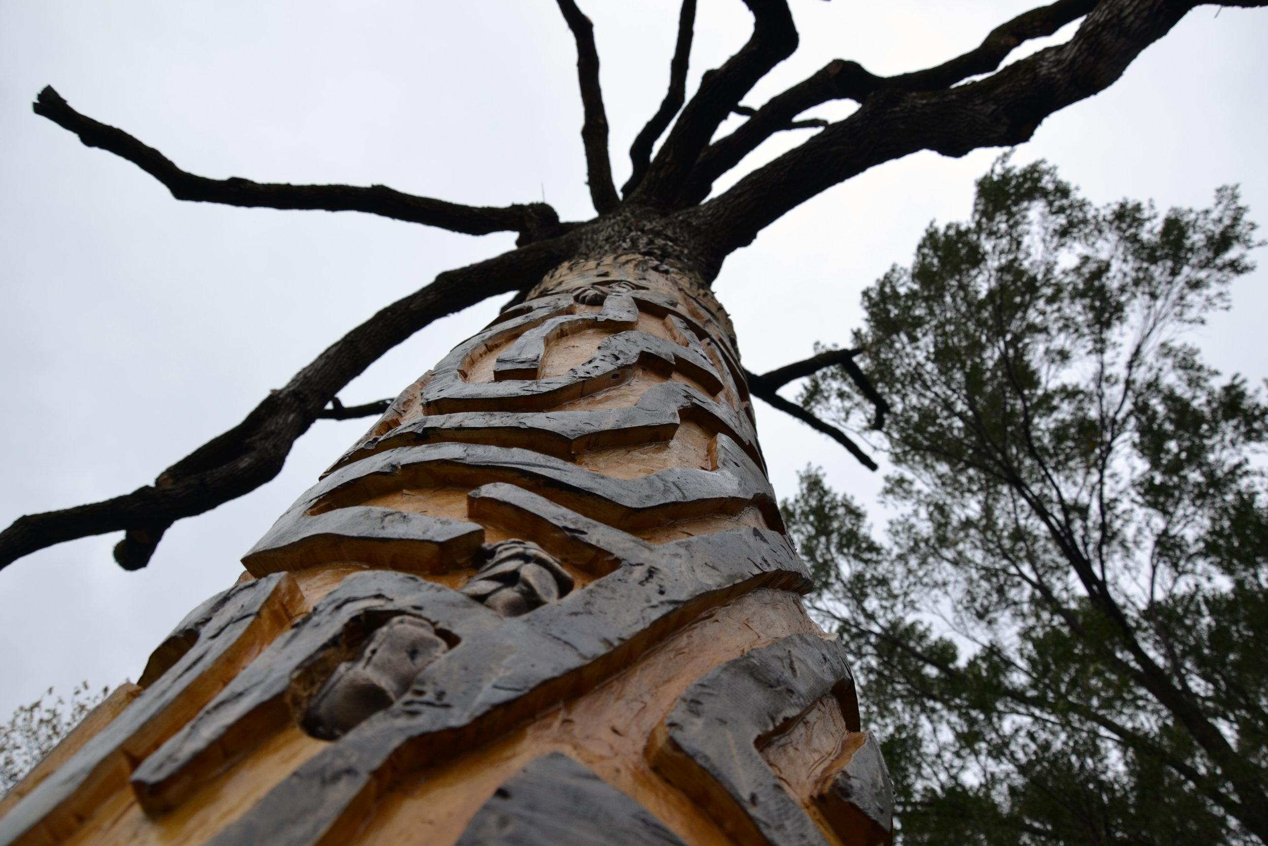 Tree from bottom.jpg