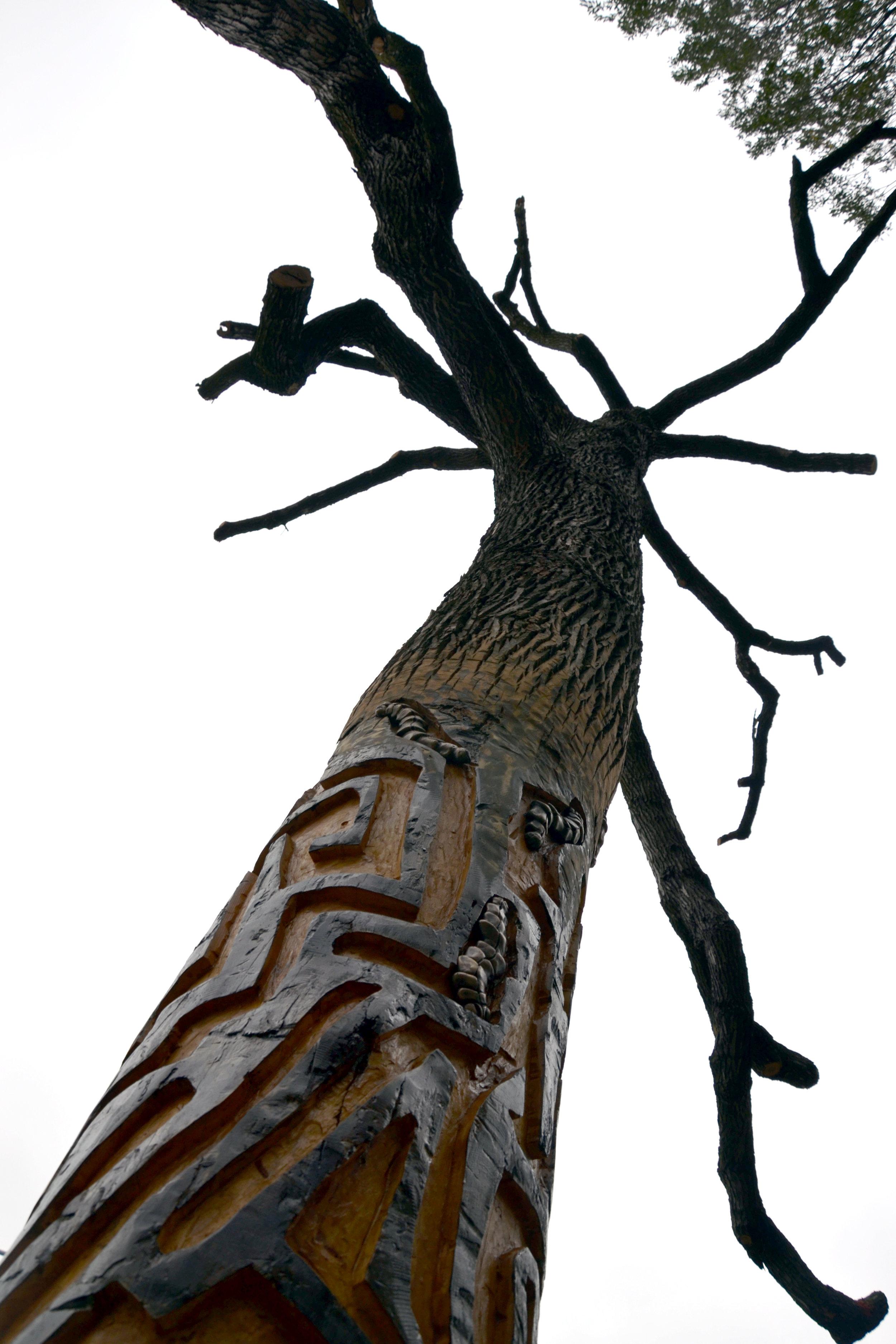 Dramatic tree.jpg
