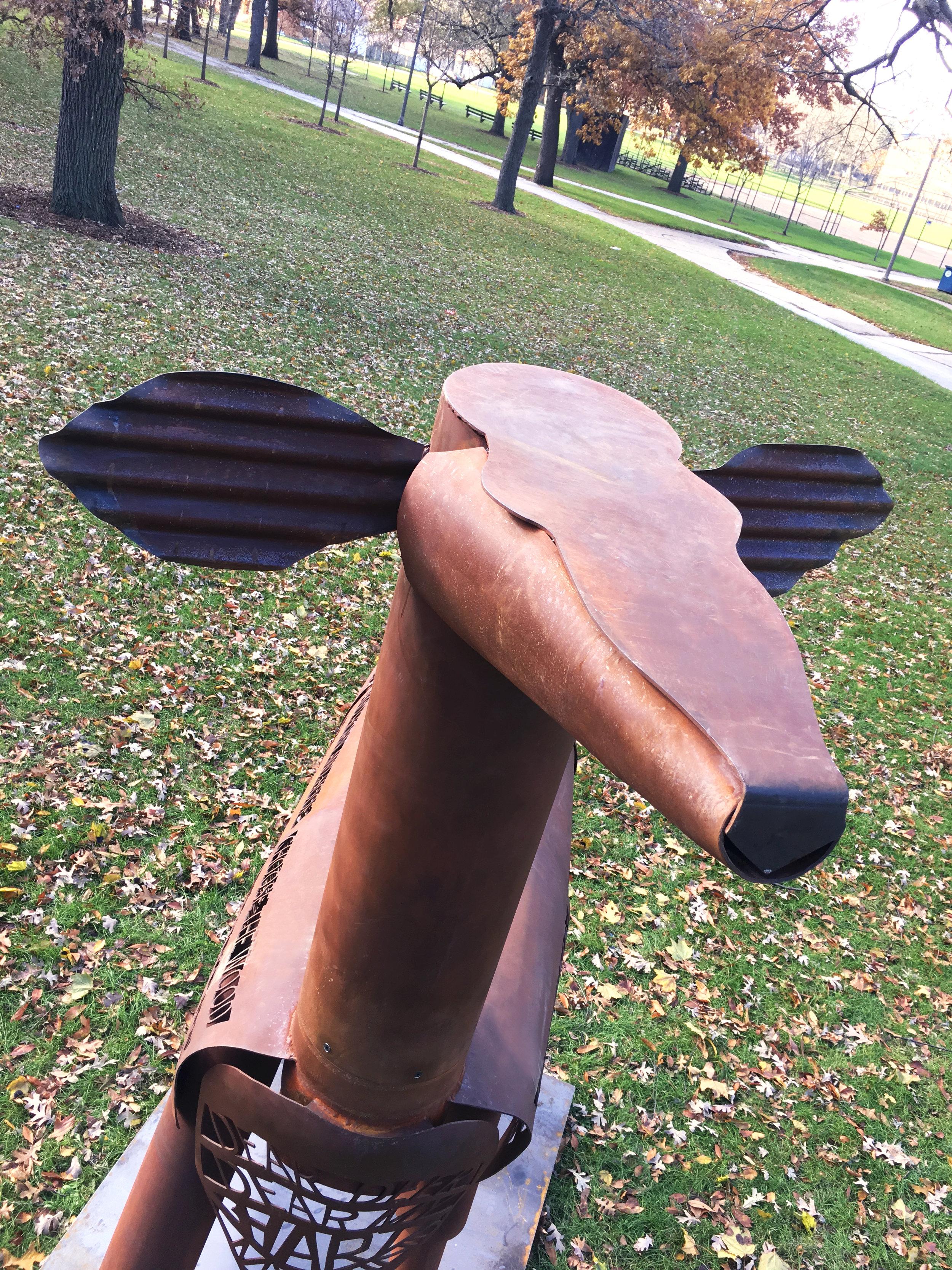 Deer, head shot.JPG