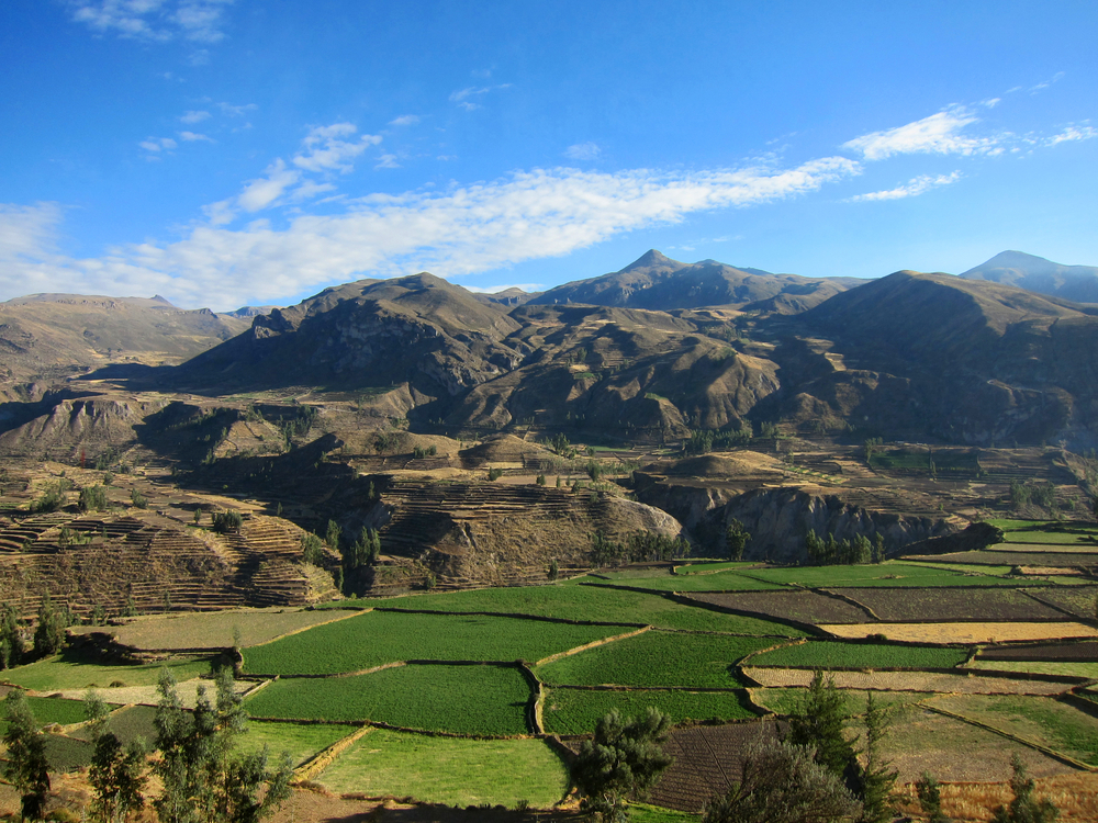 Farming terraces in the Colca Valley near Cusco Peru