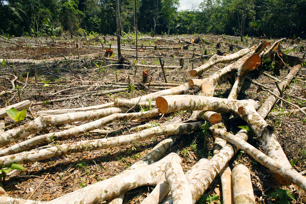 Deforestation, Amazon, Peru