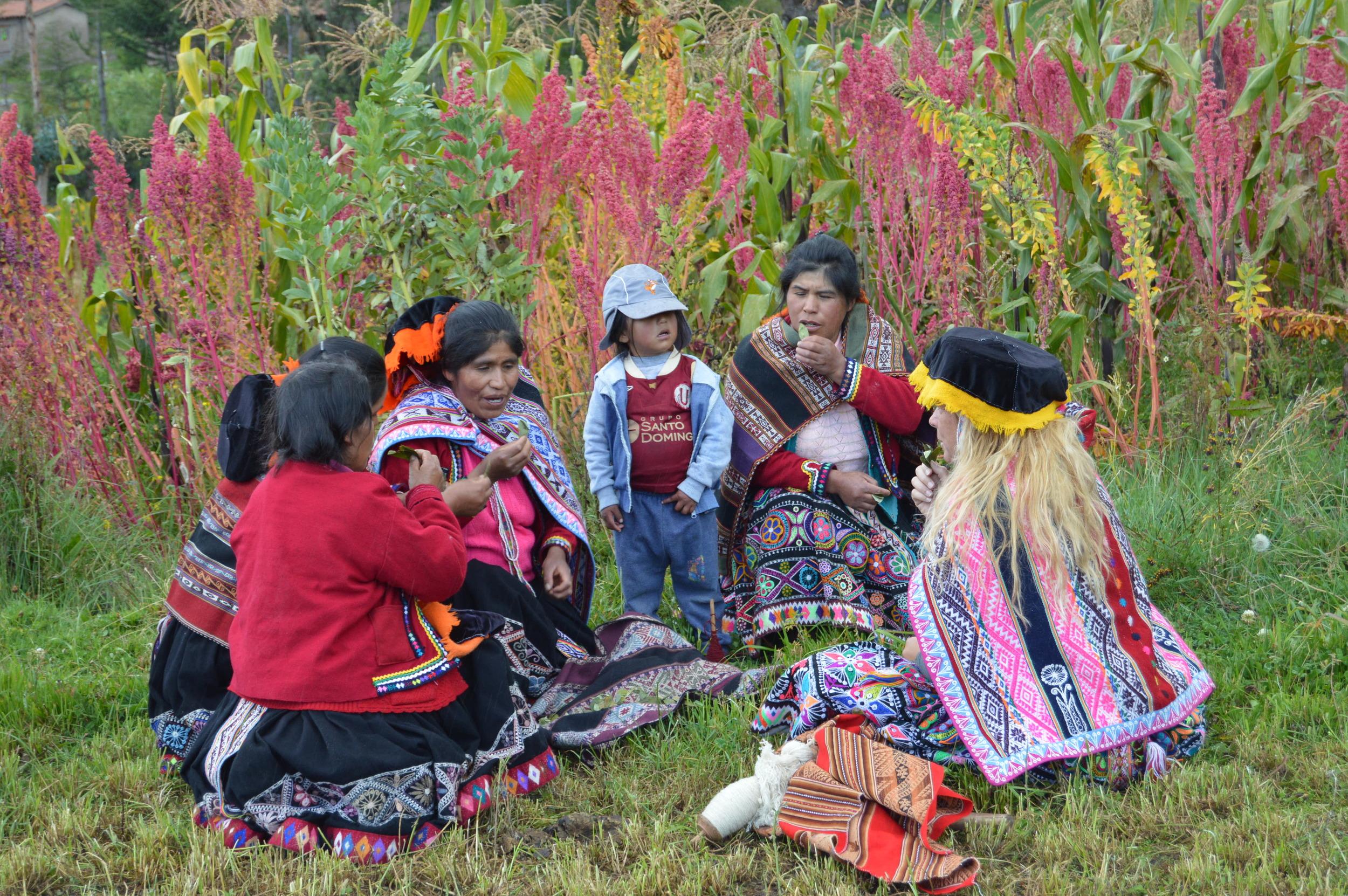 Coca leaf offering next to quinoa field at Amaru Community near Cusco, Peru