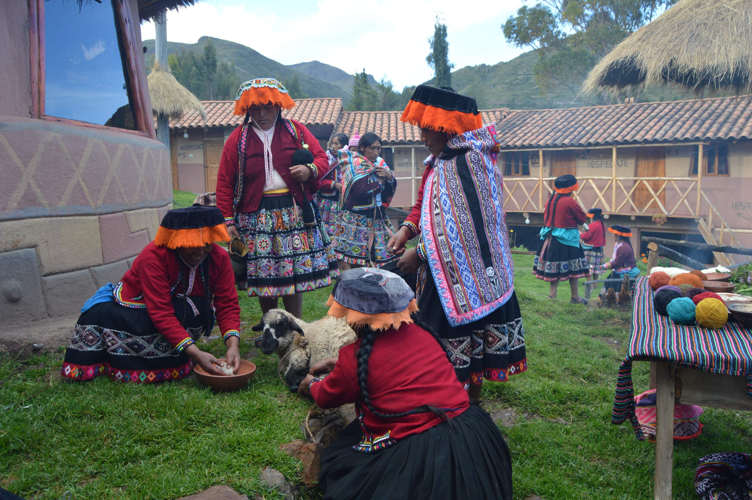 Demonstration and participation in the ancestral dyeing process, starting with the shearing of the llama or sheep