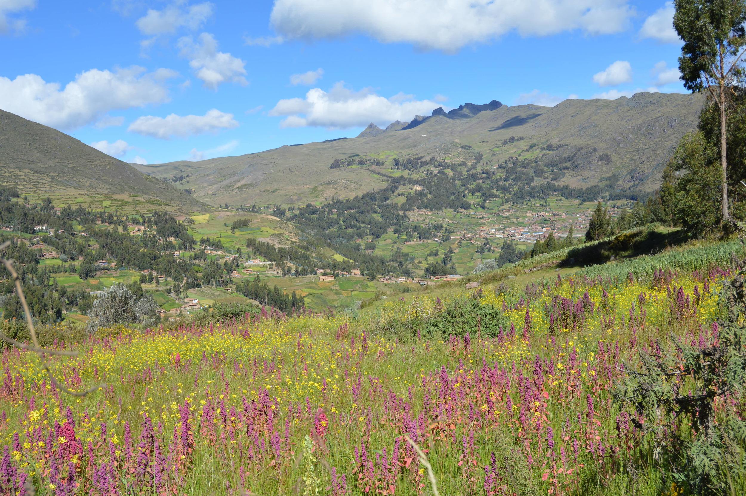 Quinoa fields of Paru Paru near Cusco, Peru