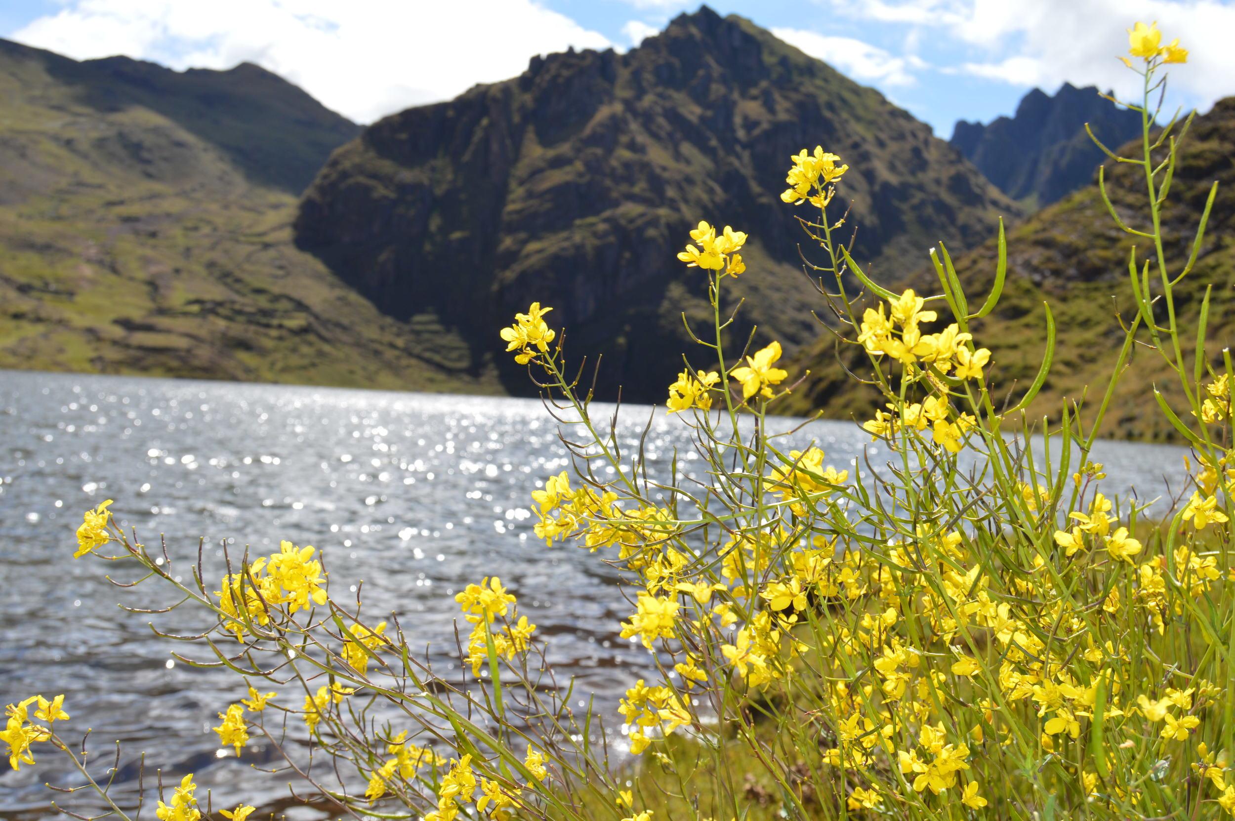 Spring landscapes of Paru Paru Community near Cusco, Peru