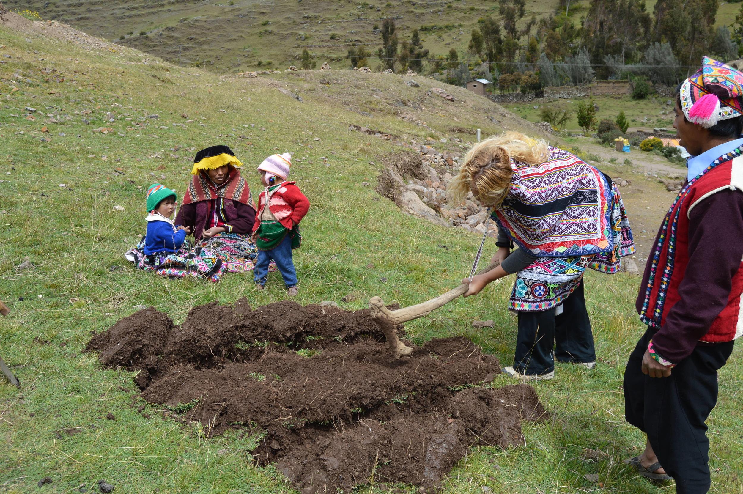 Demonstration of ancestral agricultural techniques at Paru Paru Community near Cusco, Peru