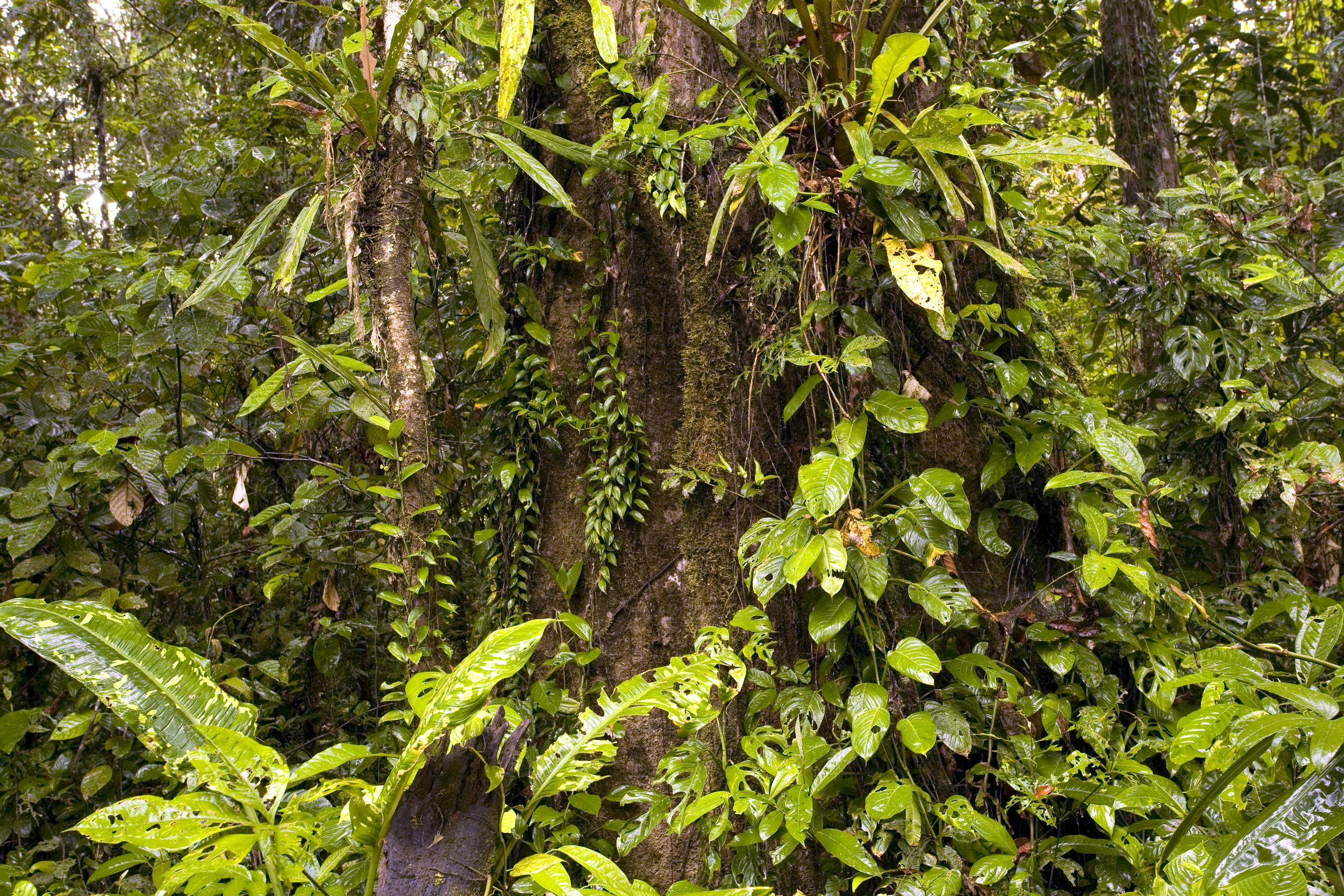 Interior of tropical rainforest in Ecuador shutterstock_85039771.jpg