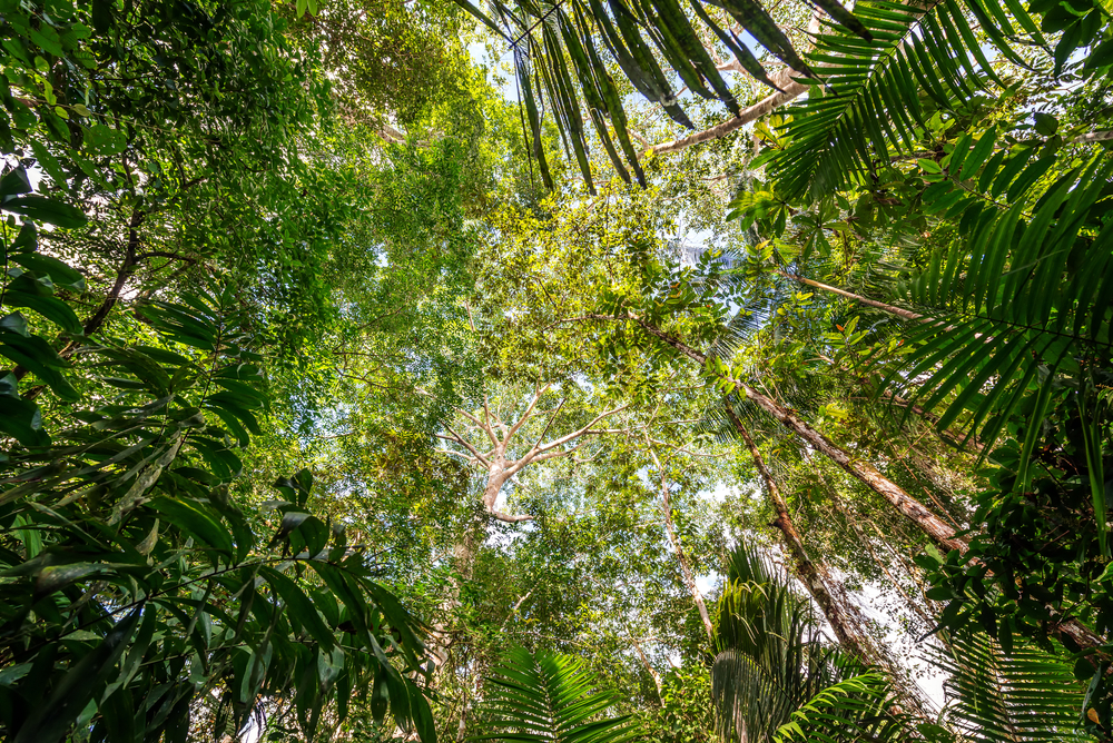 View of the thick lush green canopy of the Amazon rainforest near Iquitos, Peru shutterstock_311881406.jpg