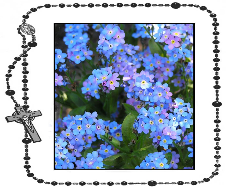 3rd Day - Myosotis (Forget-Me-Not)+.jpg