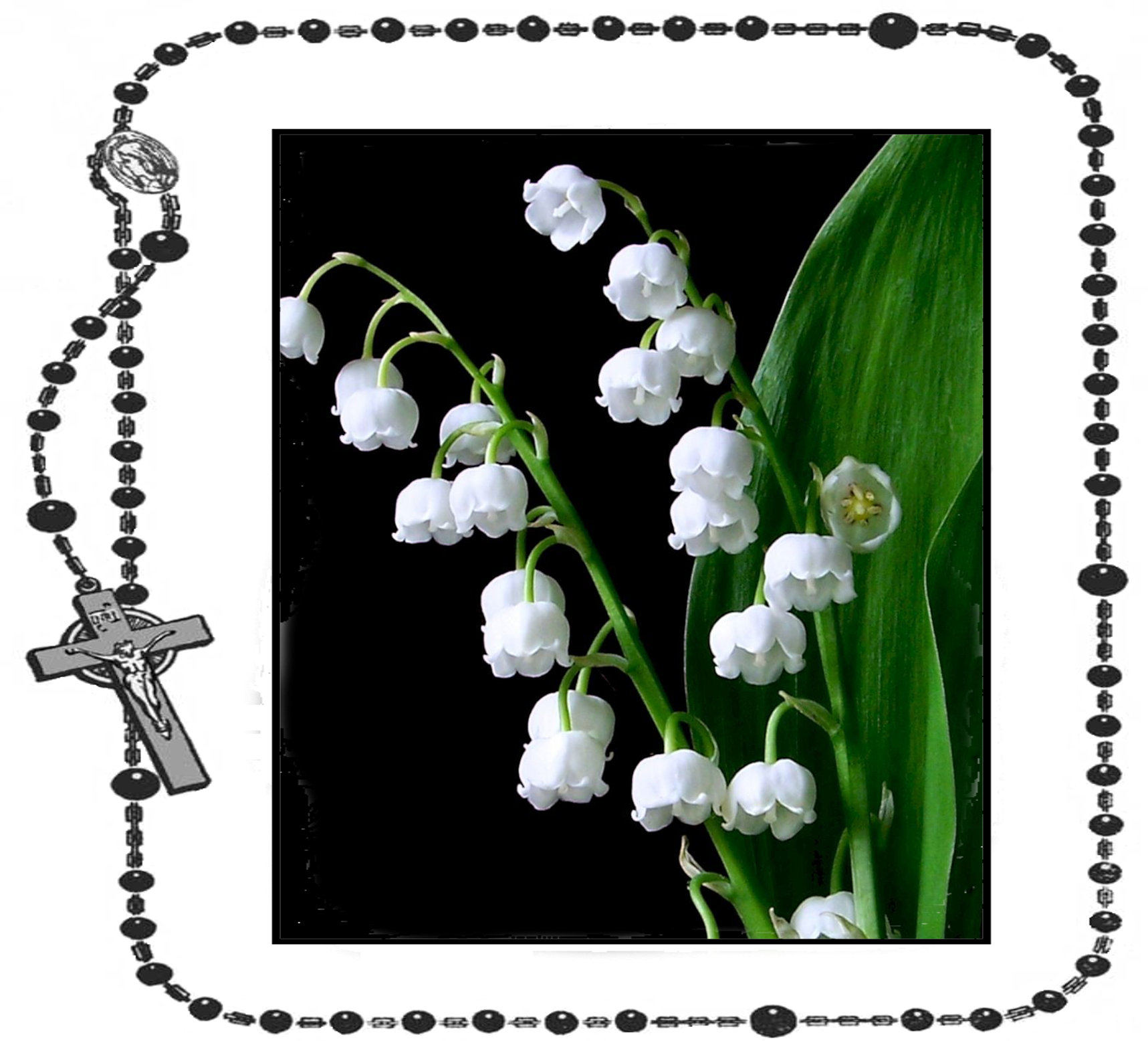16th Day - Lily of the Valley+.jpg