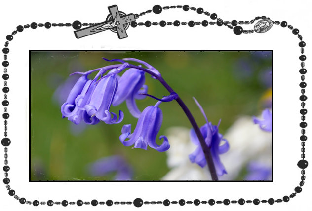 23rd Day - Bluebell+.jpg