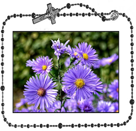 29th Day - Aster+.jpg