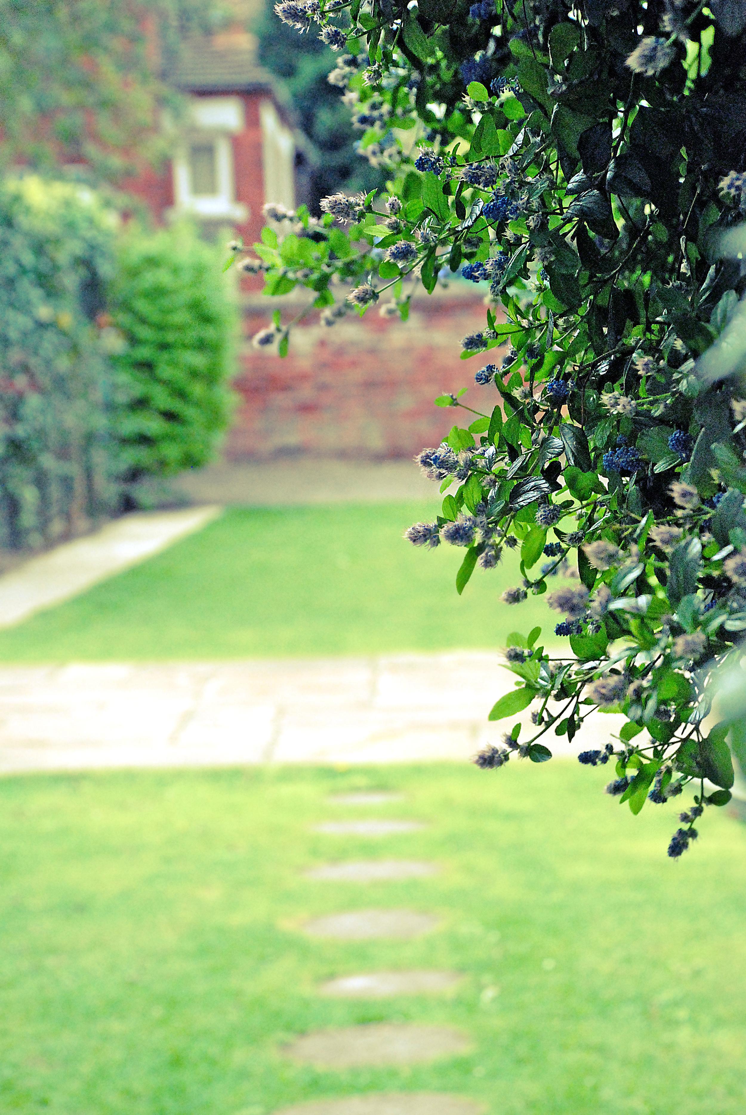 Richmand House, Residential Home Garden