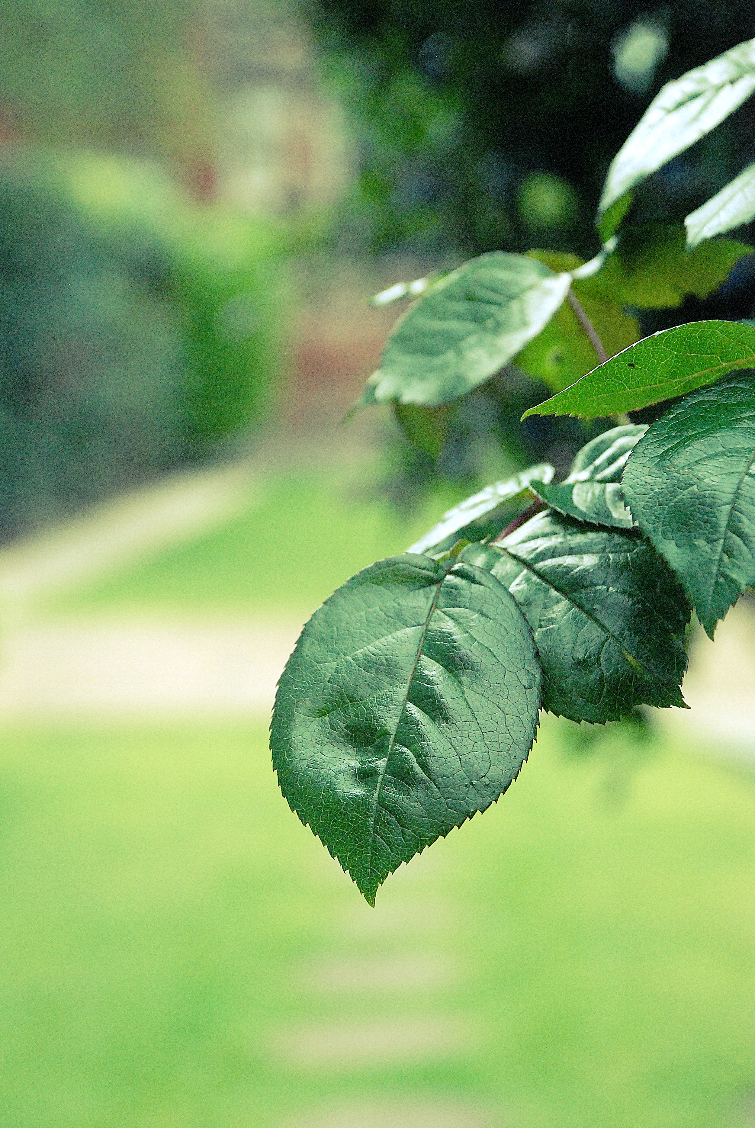 leaf close up.jpg