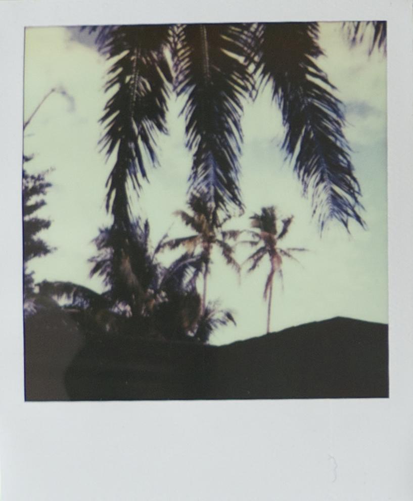 of_polaroidB.jpg