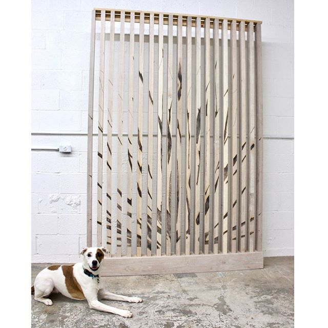 Inspired by the native agave plants found along the San Antonio riverwalk, this slat feature wall can soon be found installed in its new home at the  Marriott Riverwalk hotel. We hope it inspires guests while infusing the space with a touch of hand and a taste of the local Texas landscape. We're excited to celebrate its completion and by the looks of it Indie is pretty excited too!. . . #featurewall #agave #whiteoak #woodburning #marriotthotel #sanantonio #riverwalk #shopdog #experiencecollective