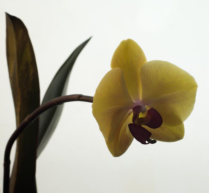 Winter Bloom PhaseOne IQ 180 80mm 1/5th sec f11 ISO 35