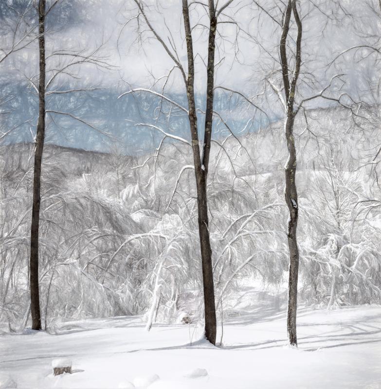 Winter Ash-.jpg