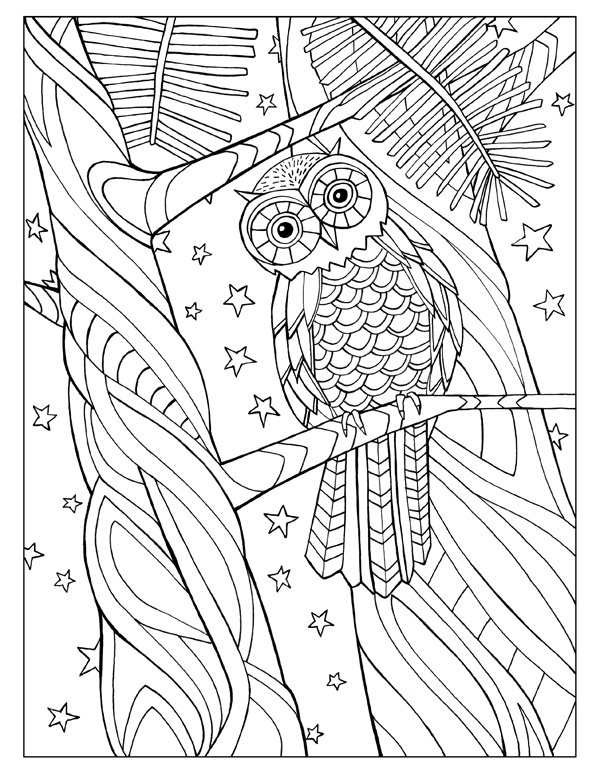Owl with Stars