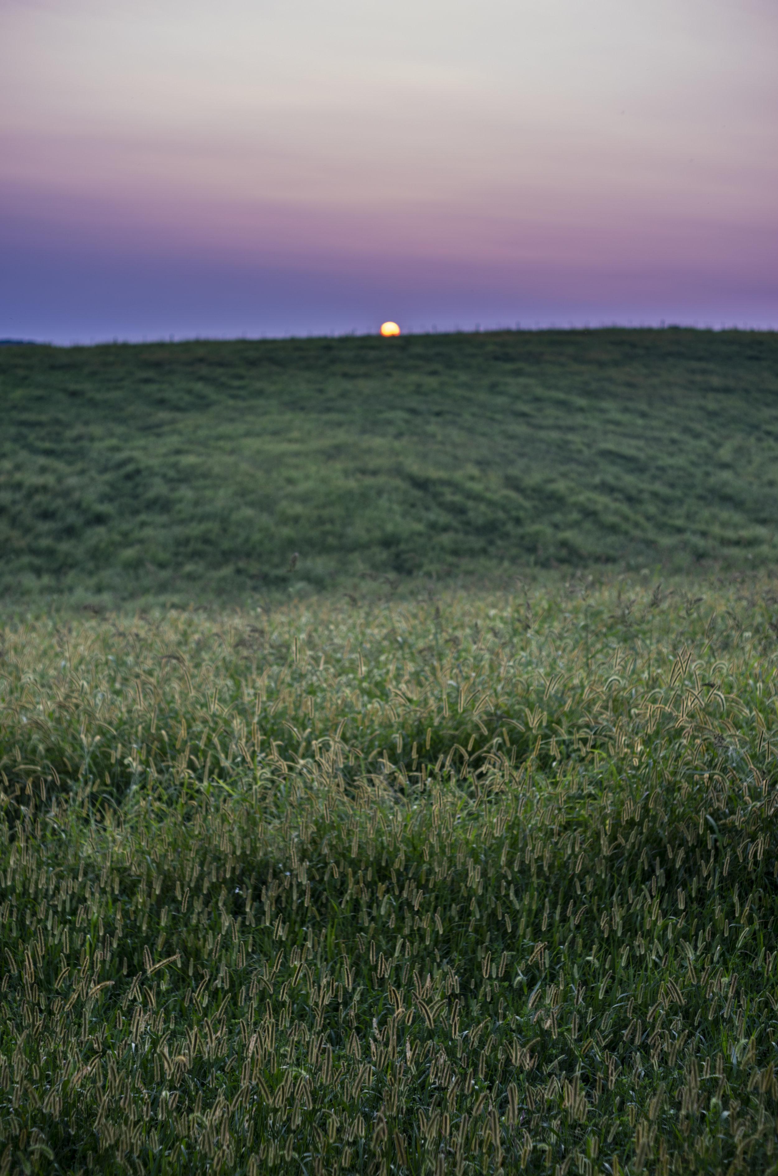 Setting sun on the farmland.JPG