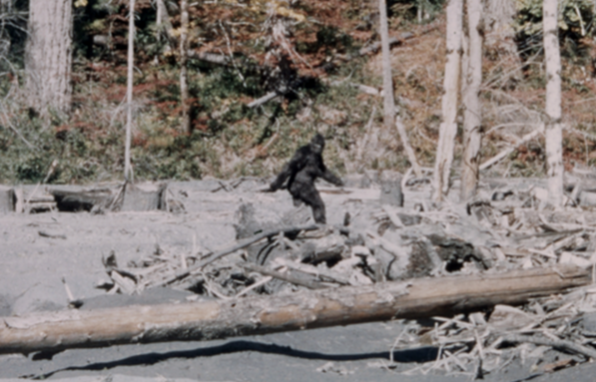 Frame 352 of the infamous Patterson-Gimlin film.  Source: wikipedia .