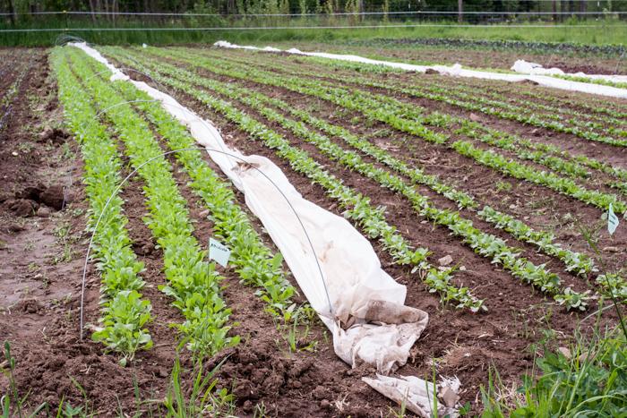 fridays-at-the-farm-may-14th-6.jpg