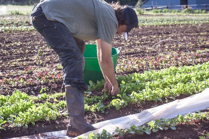 fridays-at-the-farm-may-14th-8.jpg