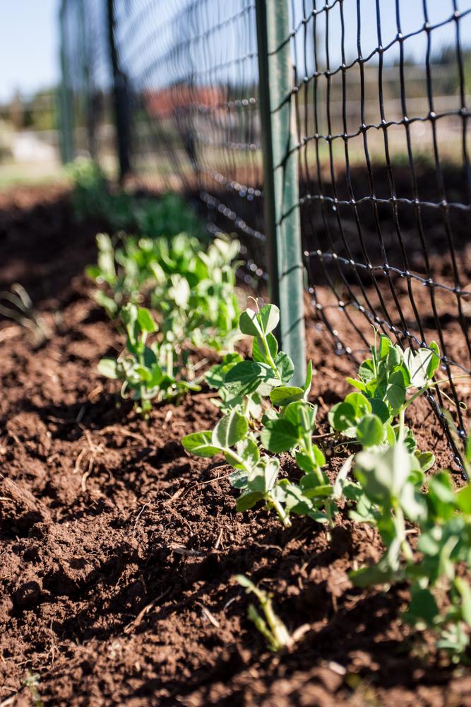 fridays-the-farm6-5-7.jpg