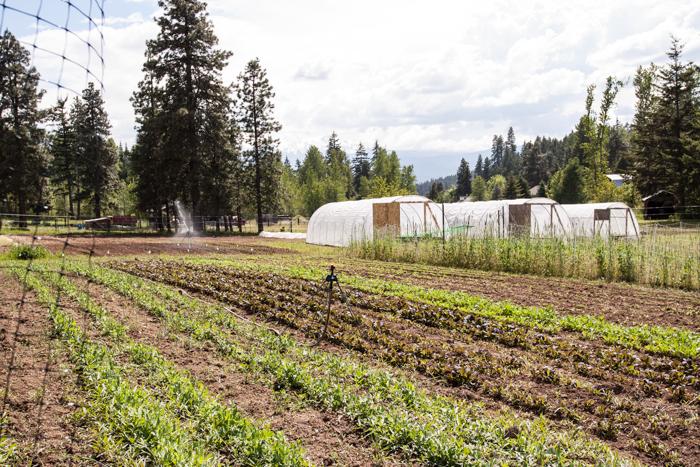 fridays-the-farm-2990may-21st.jpg