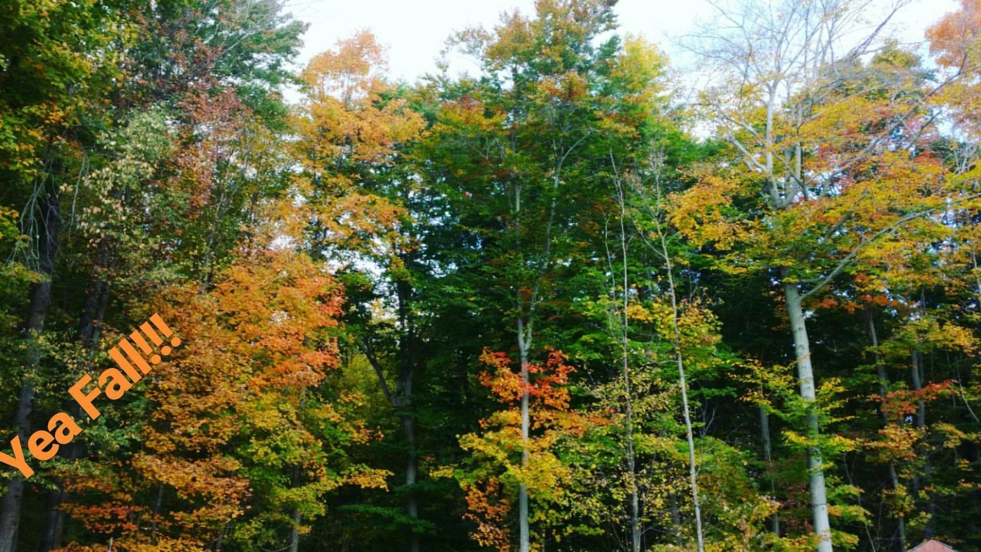 Fall in Ohio.jpg