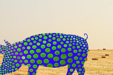 Hay-1.jpg