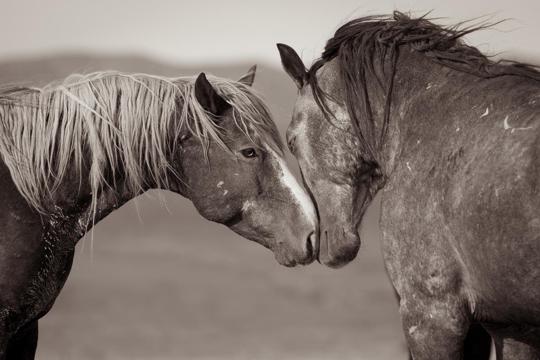Equal Us-Equus.jpg