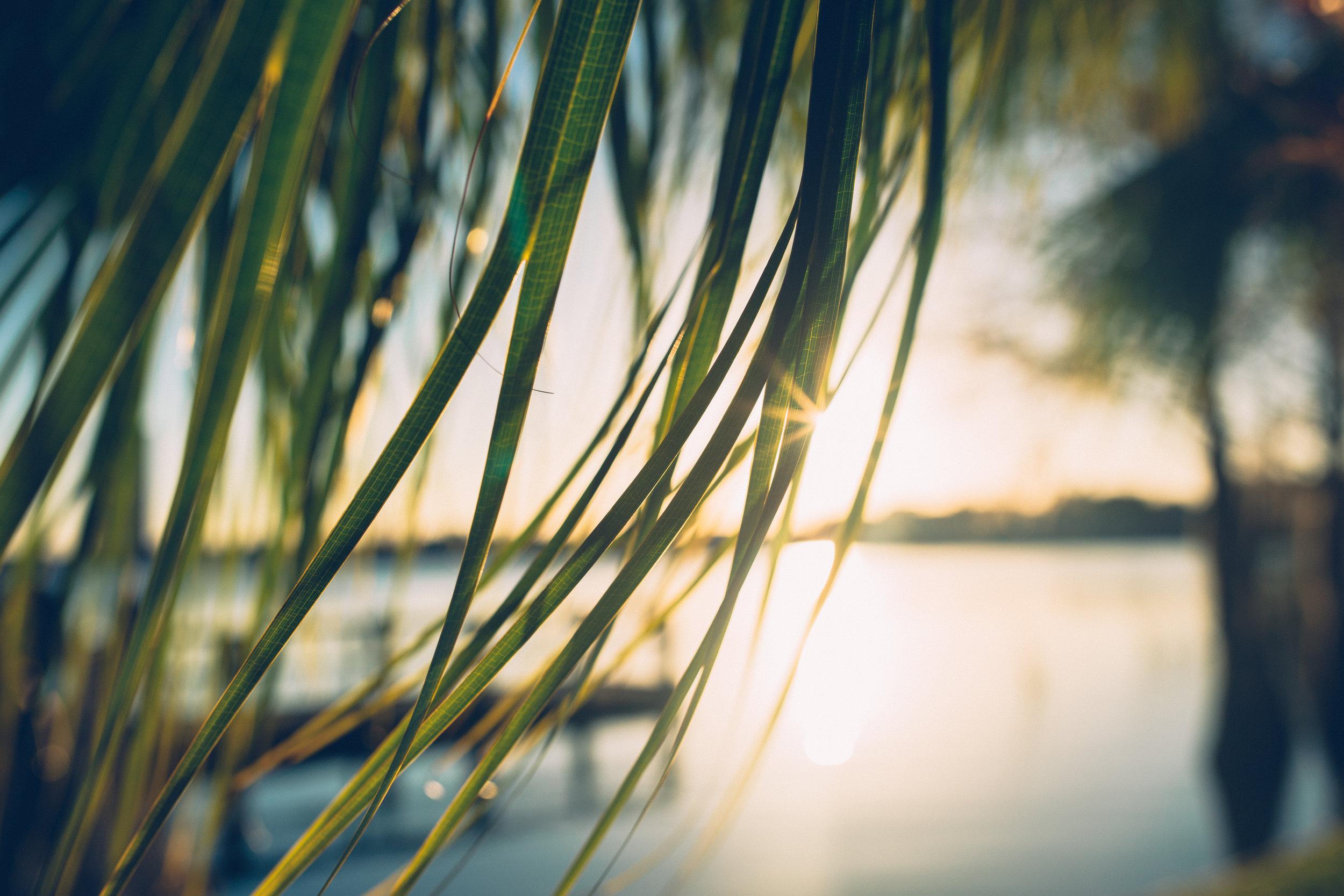 Orlando-Florida-Landscape-Photographer