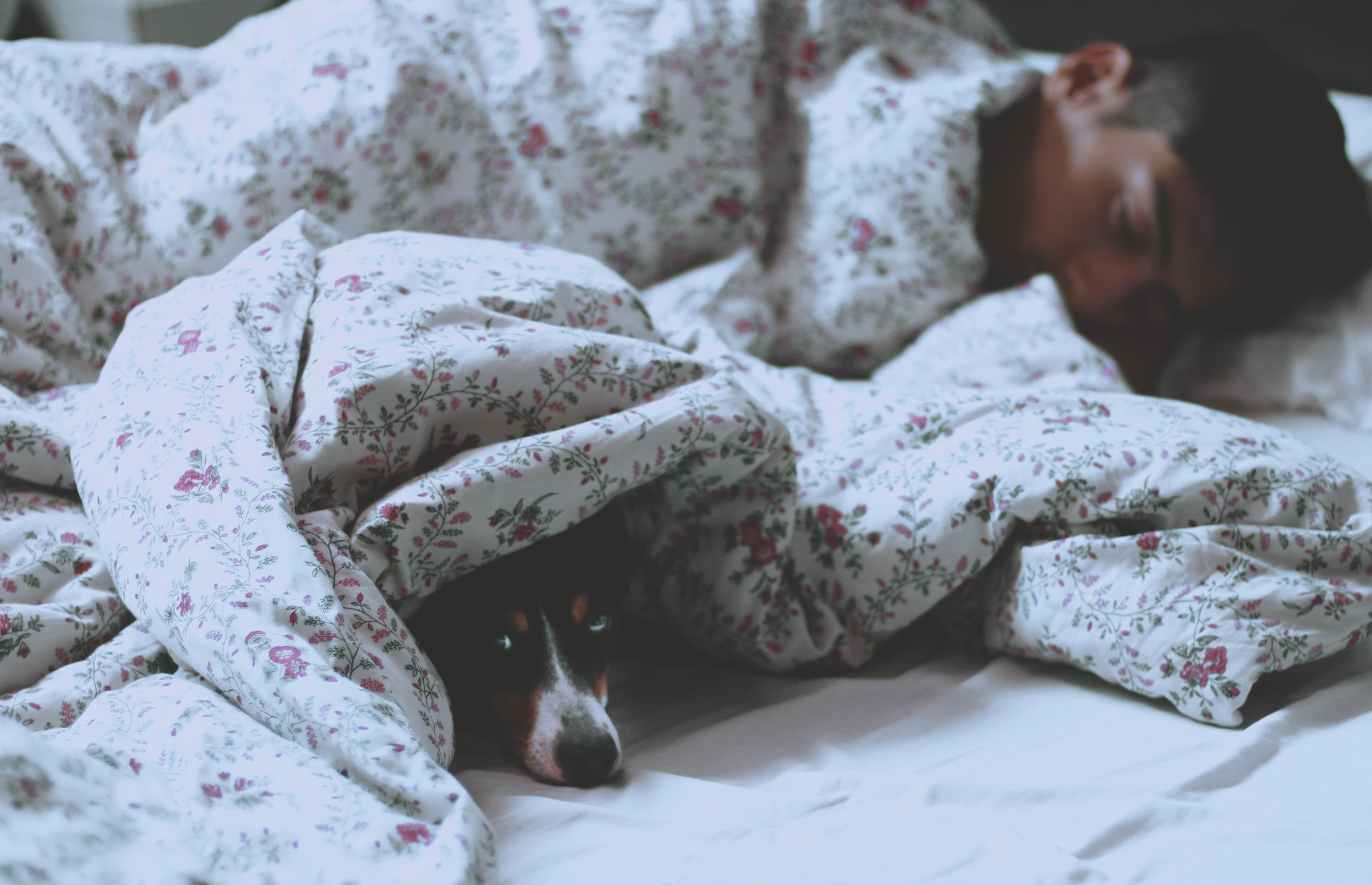 Dog and man in bed.jpg