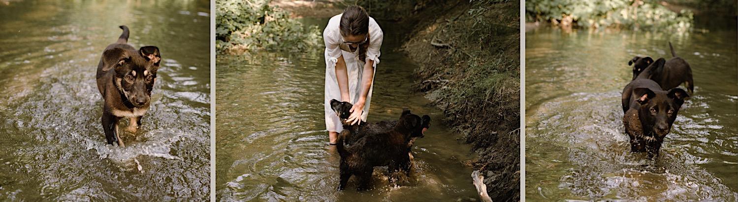 2_Pet_Photography_Photographer_dog_Indianapolis.jpg