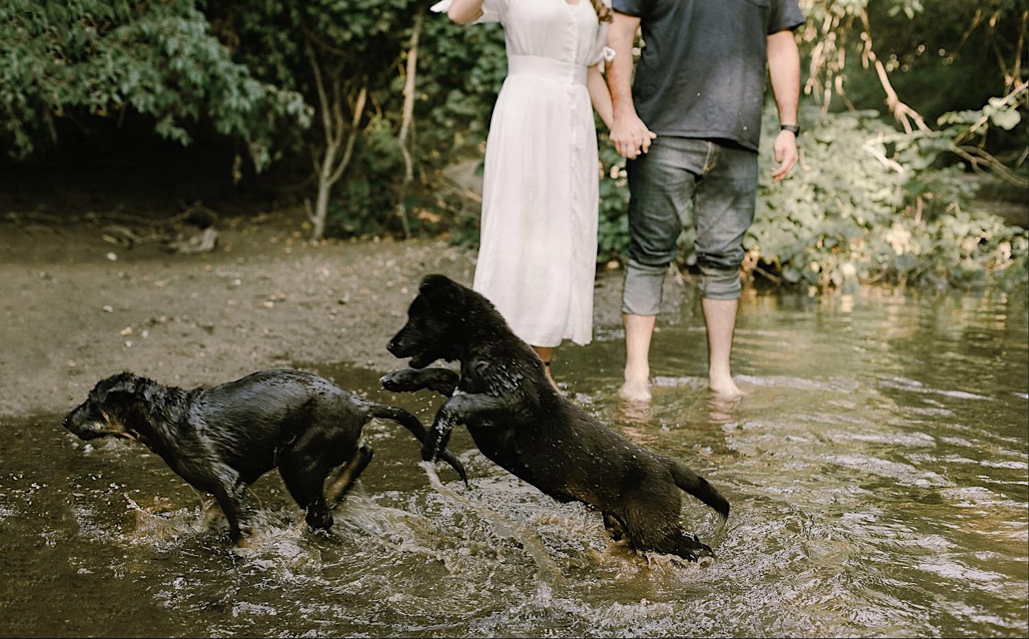 4_Pet_Photography_Photographer_dog_Indianapolis.jpg