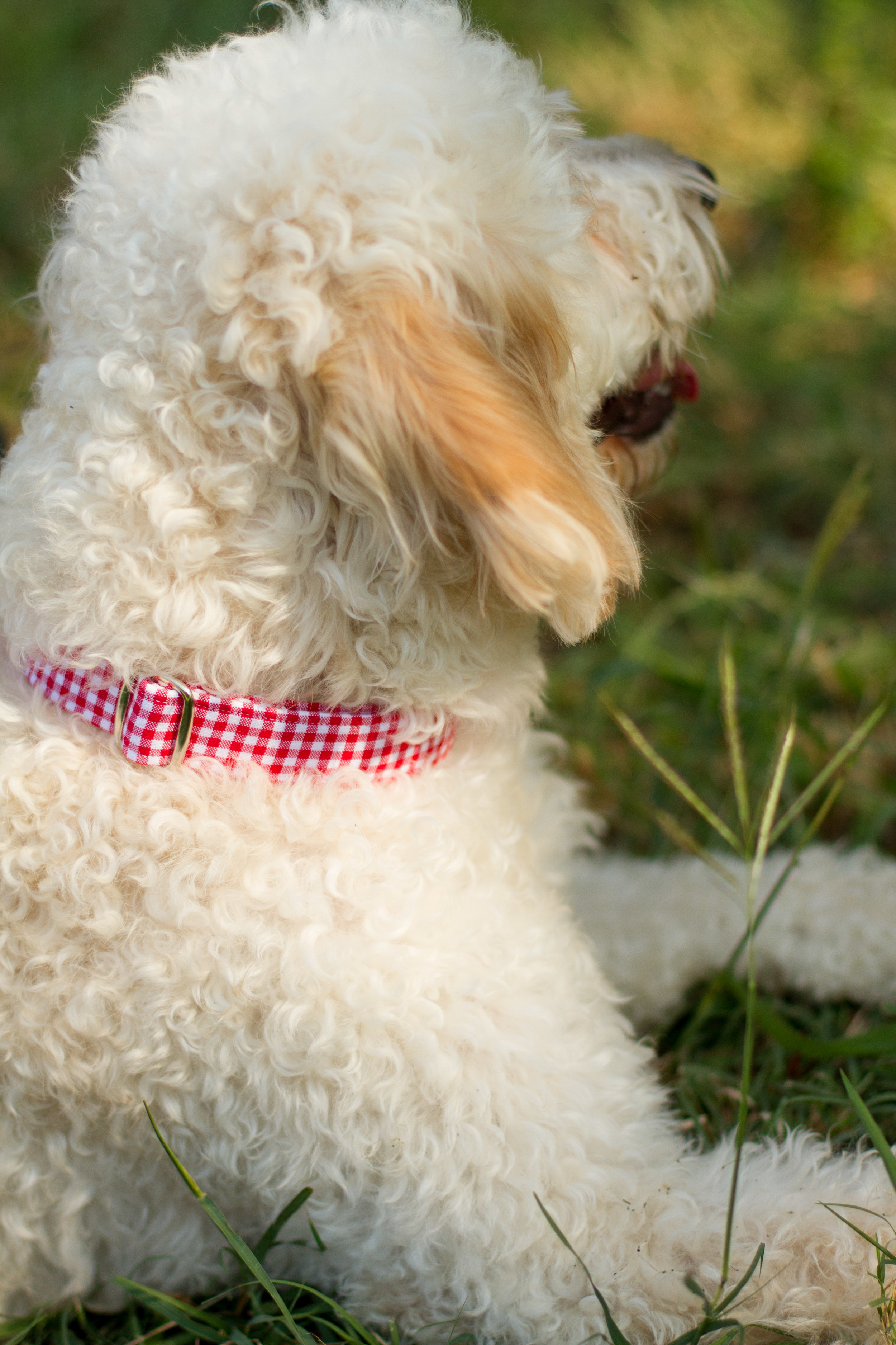 The Maggie Collar