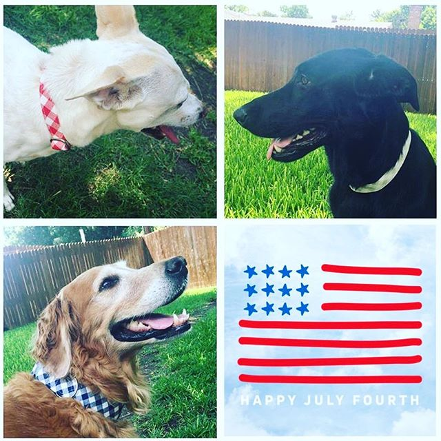 Happy Fourth of July from our pack to yours!!! ❤️🇺🇸💙