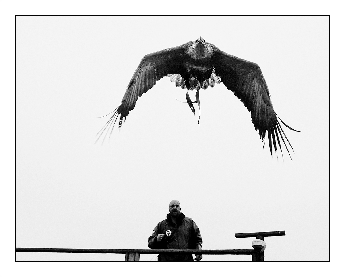 Scottish Sea Eagle