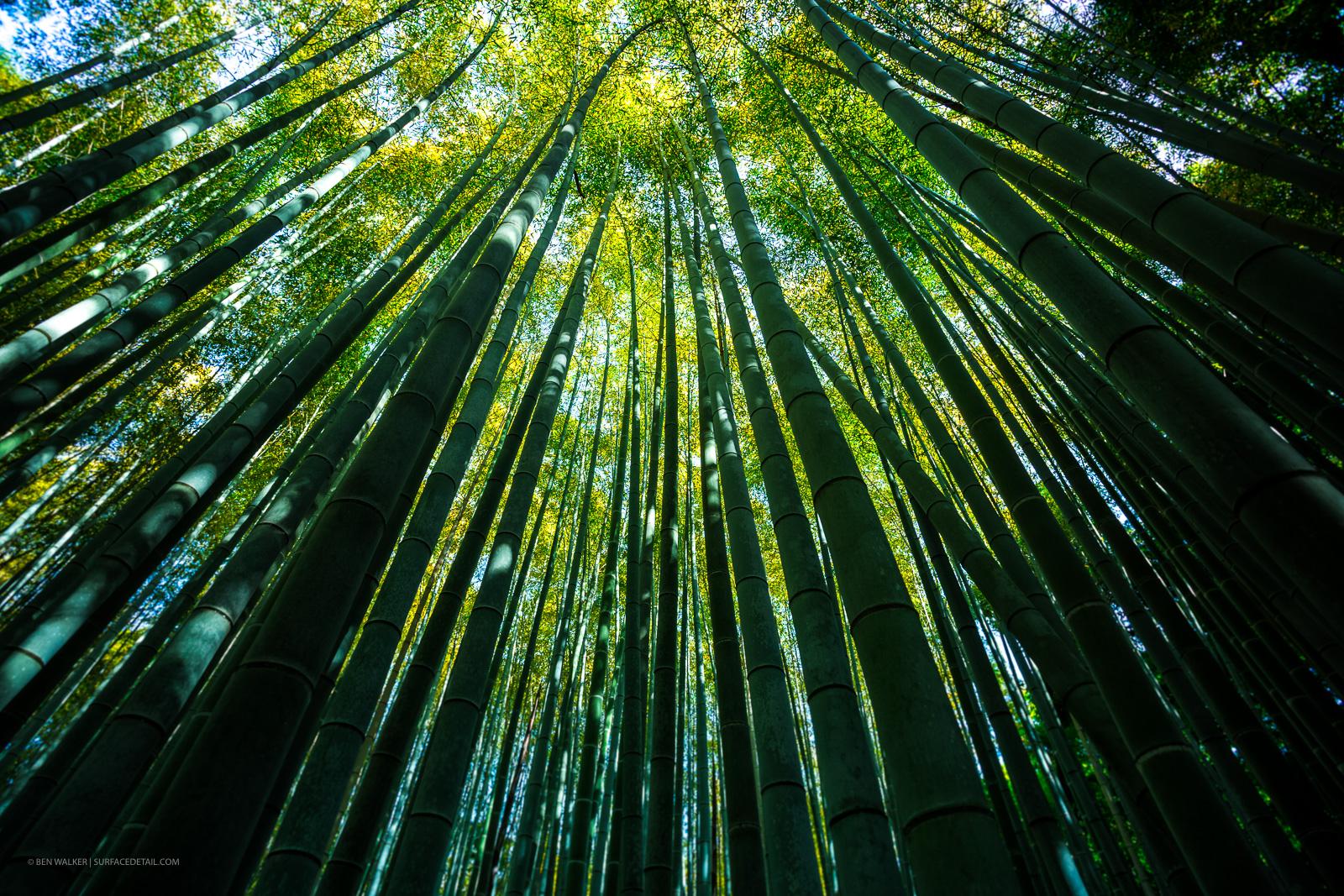 japan_nature_20160512_9.jpg